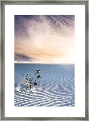 Winter Flowers Of White Sands Yucca Framed Print by Ellie Teramoto