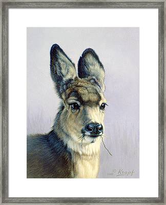 Winter Forage-fawn Framed Print by Paul Krapf