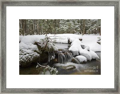 Winter Forest - Lincoln New Hampshire Usa Framed Print