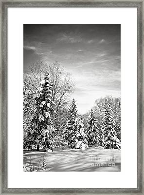 Winter Forest In Black And White Framed Print