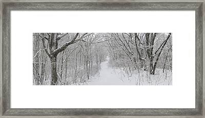 Winter Forest Framed Print by Keith Clontz