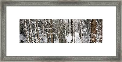 Winter Forest Landscape Panorama Framed Print by Elena Elisseeva