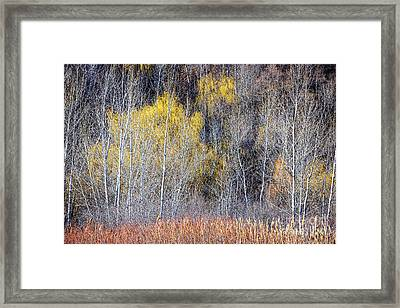 Winter Forest Landscape With Bare Trees Framed Print