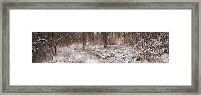 Winter Forest Panorama Framed Print by Elena Elisseeva