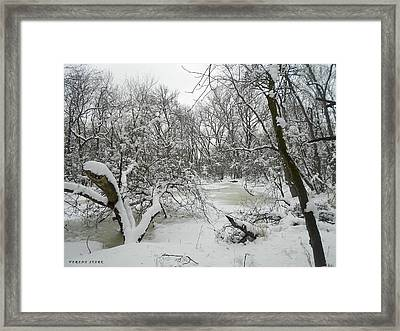 Winter Forest Series 3 Framed Print