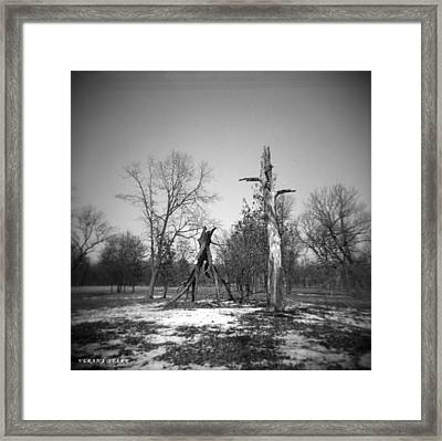 Winter Forest Series 4 Framed Print