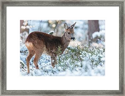 Winter Forest Wildlife Framed Print by Martin Bergsma