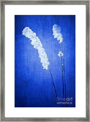 Winter Frost Framed Print by Cindy Singleton