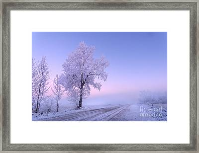 Winter Frost Framed Print