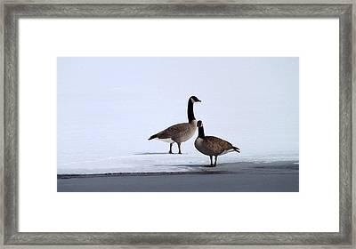 Winter Geese Framed Print by Michael Sokalski