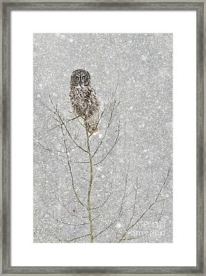 Winter Ghost Framed Print