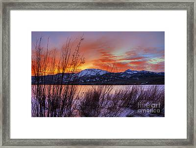 Winter Glow Framed Print by Dianne Phelps