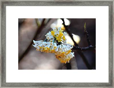 Winter Gold Framed Print by Maria Urso