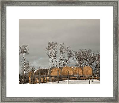 Framed Print featuring the photograph Winter Gold by Sandi Mikuse
