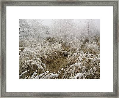 Winter Grass Framed Print by Magdalena Mirowicz