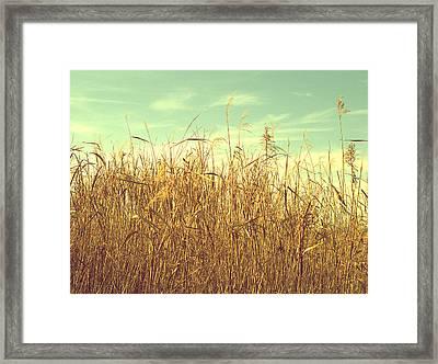 Winter Grass Framed Print