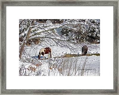 Framed Print featuring the photograph Winter Graze by Denise Romano