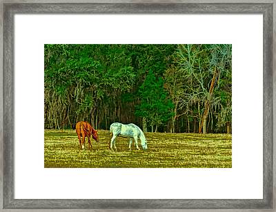 Winter Grazing In North Florida Framed Print