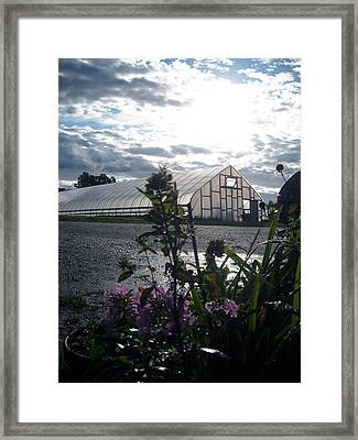 Winter Greens Framed Print