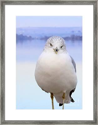 Winter Gull Framed Print