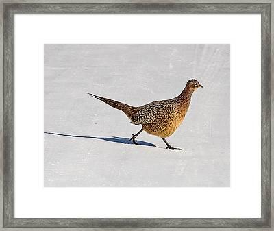 Winter Hen Framed Print