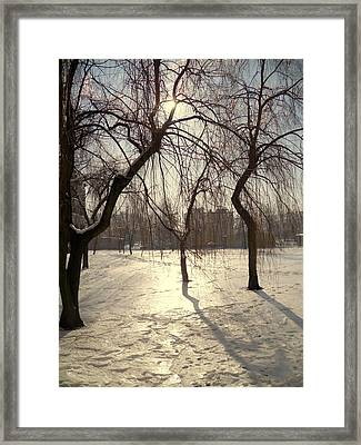 Willows In Winter Framed Print by Henryk Gorecki