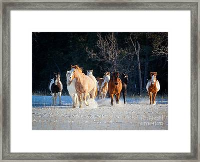 Winter Horses Framed Print by Inge Johnsson