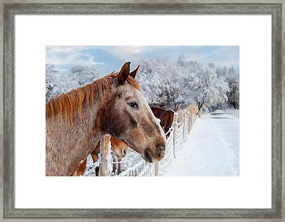 Winter Horses Framed Print by Steven Milner