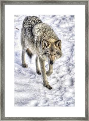 Winter Hunter Framed Print by Joshua McCullough