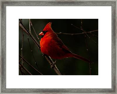 Winter Icon 3 Framed Print