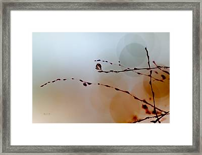 Winter Impressions Framed Print