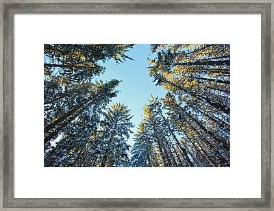 Winter In A Spruce Forest Framed Print by Jerry and Marcy Monkman