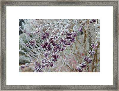 Framed Print featuring the photograph Winter In Lila by Felicia Tica