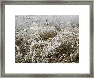 Winter In Poland Framed Print by Magdalena Mirowicz