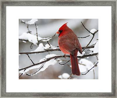 Winter In Red Framed Print