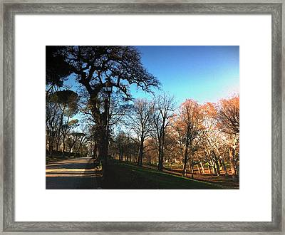 Winter In Rome Framed Print by Daniele Zambardi