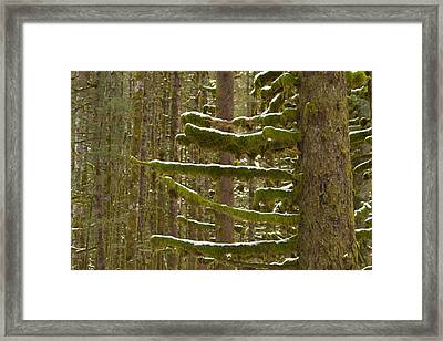 Winter In The Forest Framed Print