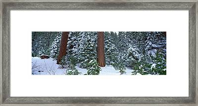 Winter In The Sierra Mountains Framed Print