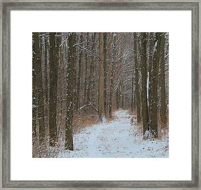 Winter In The Wilderness Framed Print by Dan Sproul