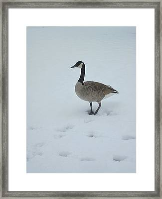 Winter In Their Cry Framed Print by Guy Ricketts