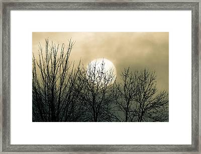 Winter Into Spring Framed Print