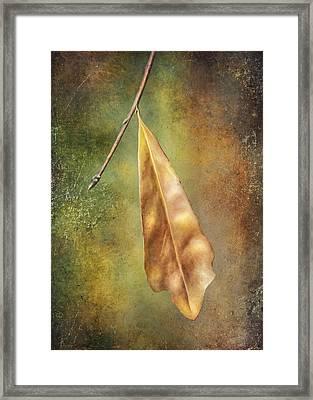 Winter Is Coming Framed Print by Brenda Bryant
