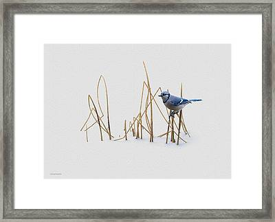 Winter Jay Framed Print by Ron Jones