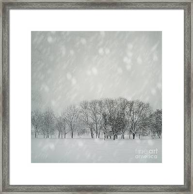 Winter Framed Print by Jelena Jovanovic