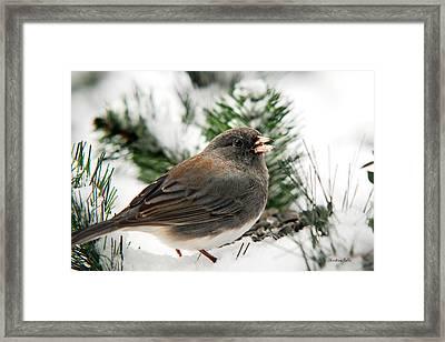 Winter Junco Framed Print by Christina Rollo