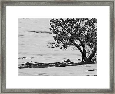 Framed Print featuring the photograph Winter Juniper  by Eric Rundle