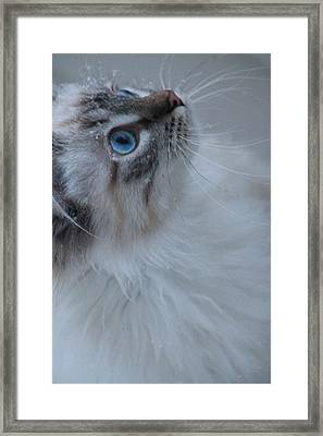 Winter Kitty Framed Print by Alicia Knust