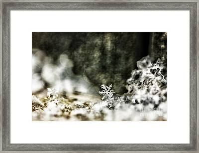 Winter Lace Framed Print by Darren Fisher