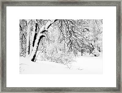 Winter Lace II Framed Print by Jenny Rainbow