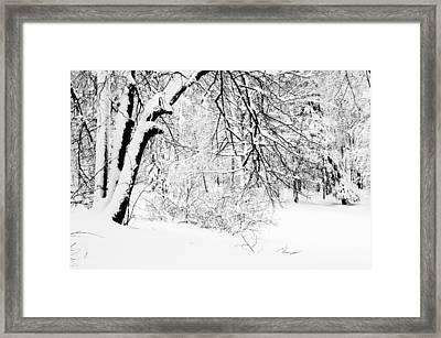 Winter Lace II Framed Print by Jenny Rainbow